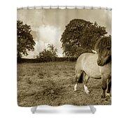 Shetland Pony  Shower Curtain