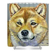 Shiba Inu - Suki Shower Curtain by Michelle Wrighton