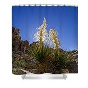 Shields Shower Curtain