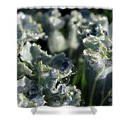 Shimmer In The Forest Of Dew Shower Curtain