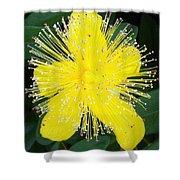 Shimmer Yellow Flower Shower Curtain