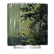 Shimmering Pine Shower Curtain