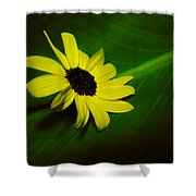 Shine Your Light Shower Curtain