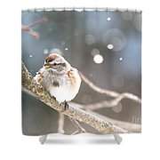 Shiny Tree Sparrow Shower Curtain