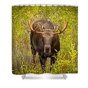 Shiras In The Willows Shower Curtain