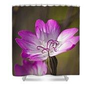 Shocking Pink Chenille Shower Curtain