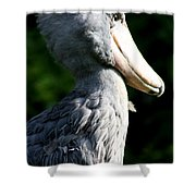Shoebill Portrait Shower Curtain