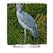 Shoebill Stork Shower Curtain