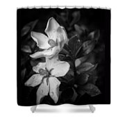 Shooting Stars Plural Shower Curtain by Ben Shields