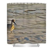 Shore Bird 7 12/5 Shower Curtain