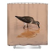 Shore Bird At Whitewater Draw Shower Curtain