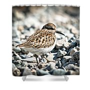 Shorebird Beauty Shower Curtain