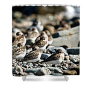 Shorebird Rest Time Shower Curtain