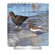Shorebirds And Breaking Wave Shower Curtain