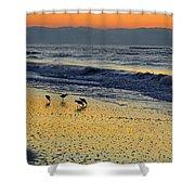Shorebirds At Dawn Shower Curtain