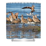 Shorebirds Flocking At Bodega Bay Shower Curtain