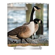 Shoreline Stroll Shower Curtain