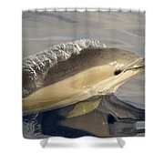 Short-beaked Common Dolphin Azores Shower Curtain by Malcolm Schuyl