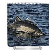 Short-beaked Common Dolphin Sea Shower Curtain