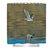 Short-billed Dowitcher And Reflection Shower Curtain