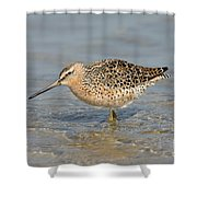 Short-billed Dowitcher, Breeding Shower Curtain