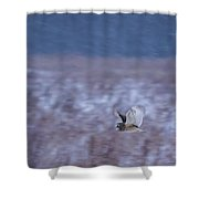 Short Eared Owl Hunting 3 Shower Curtain
