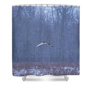 Short Eared Owl In Motion Shower Curtain