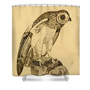 Short-eared Owl Shower Curtain