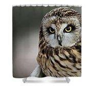 Short Eared Owl Portrait Shower Curtain
