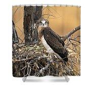 Short-toed Snake Eagle Circaetus Gallicus Shower Curtain