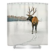 Shortest Distance Elk Shower Curtain
