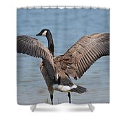Show Of Feathers Shower Curtain