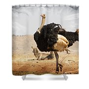 Show-off Modern Shower Curtain