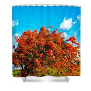 Shower Tree 18 Shower Curtain