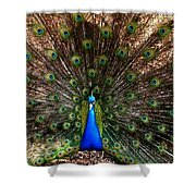 Showing All His Glory Shower Curtain
