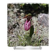Showy Lady's Slipper 1 Shower Curtain