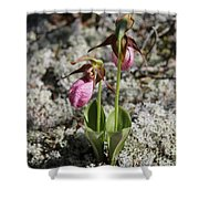Showy Lady's Slipper 2 Shower Curtain