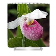 Showy Lady's Slipper Shower Curtain