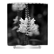 Obedient Plant In Black And White Shower Curtain