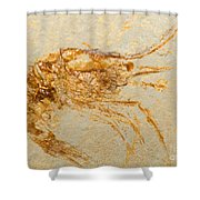 Shrimp Fossil Shower Curtain