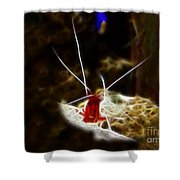 Shrimp Who Won The Fight Shower Curtain