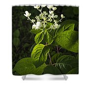 Shrub With White Blossoms Shower Curtain