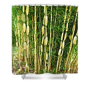 Shweeash Bamboo 2 Shower Curtain
