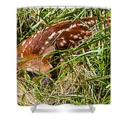 Shy Fawn In Meadow Shower Curtain