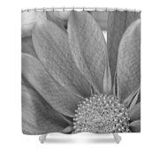 Shy Grey Shower Curtain