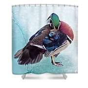 Shy Is A Wood Duck Shower Curtain