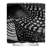 Shy Loon - Painted Rock - Seabird - One Of A Kind Shower Curtain