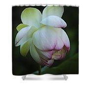 Shy Lotus Shower Curtain