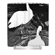 Shy Swans Shower Curtain