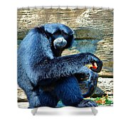 Siamang Having A Snack Shower Curtain
